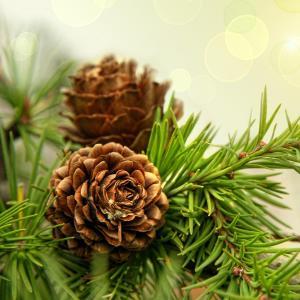 Поздравляю с наступающим Новым Годом